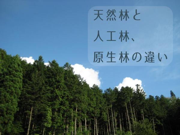 天然林、人工林、原生林