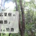 国産広葉樹